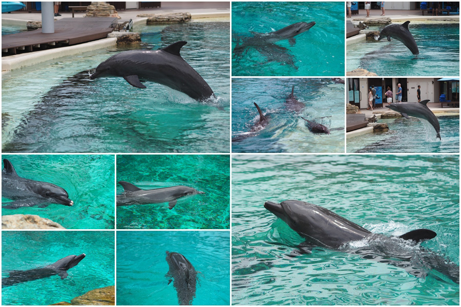 แพ็กเกจ Dolphin Discovery