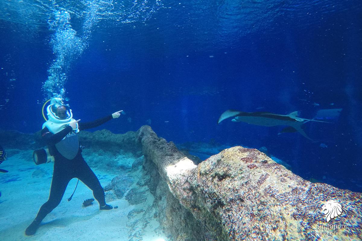 S.E.A Aquarium สิงคโปร์