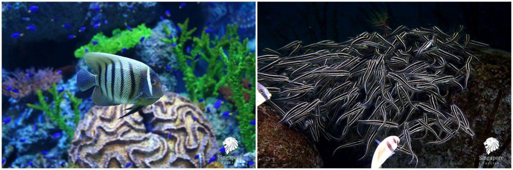 พิพิธภัณฑ์สัตว์น้ำ สิงคโปร์